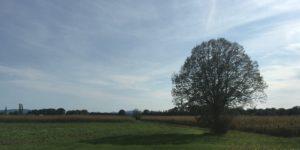 Feld mit Baum in Slowenien
