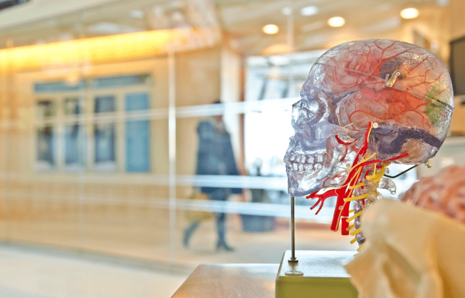glass skull with vasculature